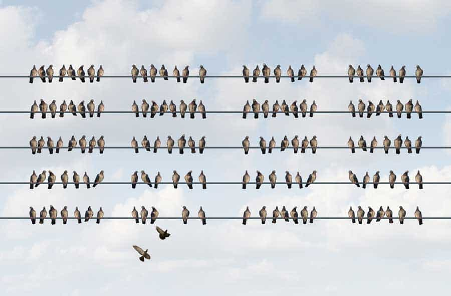 Social Alignment